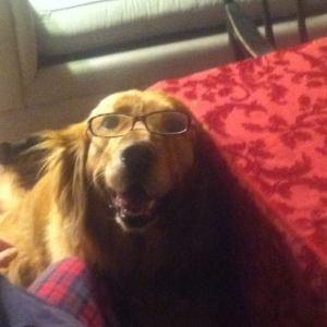 Rudy glasses